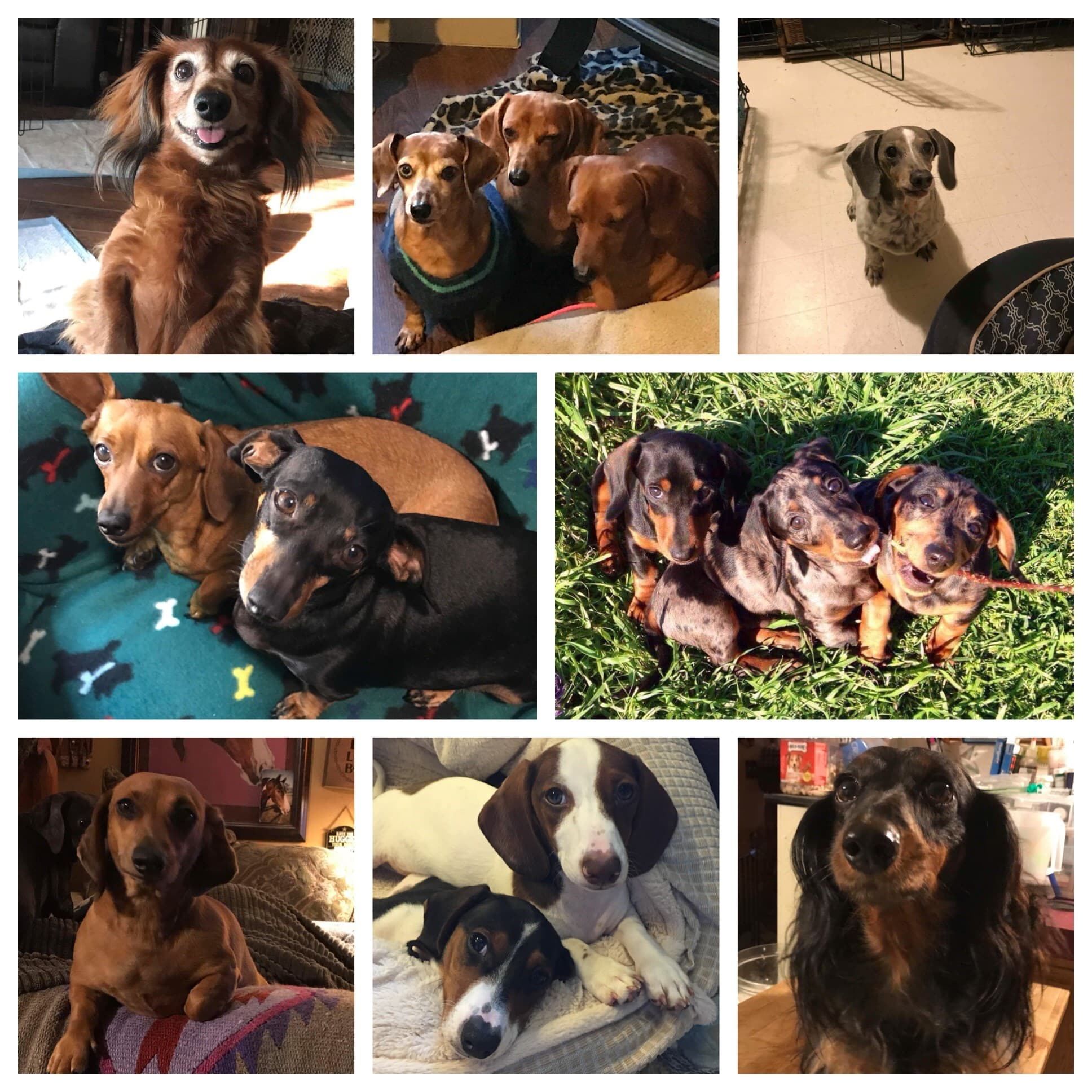 Collage of Dog Images